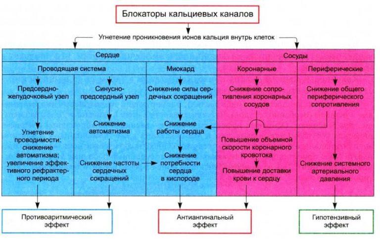 Изображение - Понижающие давление таблетки для мужчин Blokatory-kaltsievyh-kanalov-1