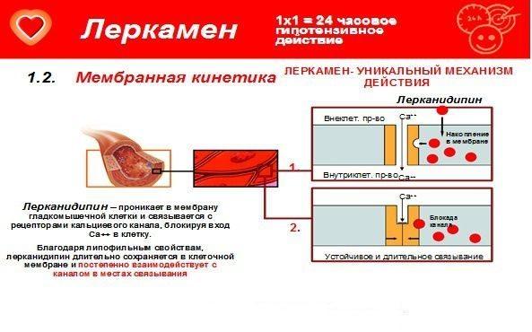 Леркамен мембранная кинетика