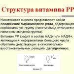 Никотиновая кислота витамин рр