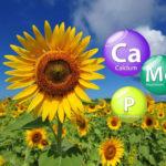 Микроэлементы - калий, магний, фосфор