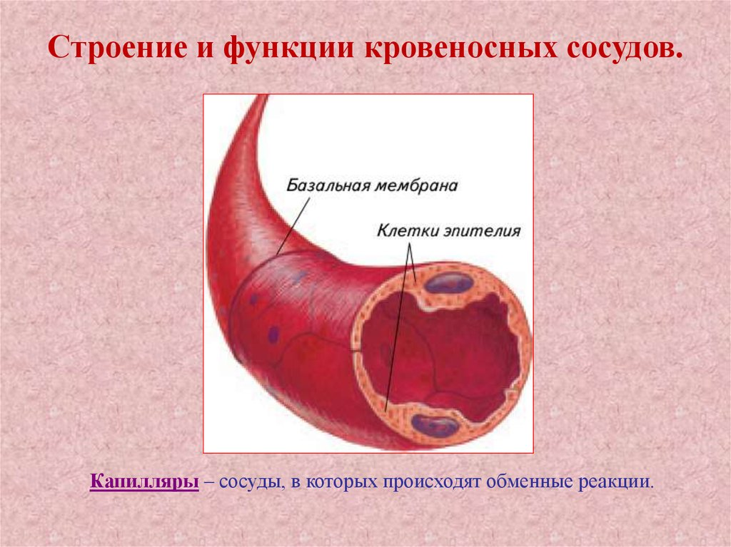 Изображение - Понижающие давление таблетки для мужчин Rasslabit-stenki-sosudov.