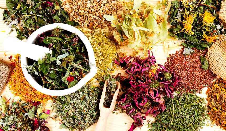 Травы понижающие артериальное давление - все виды и рецепты