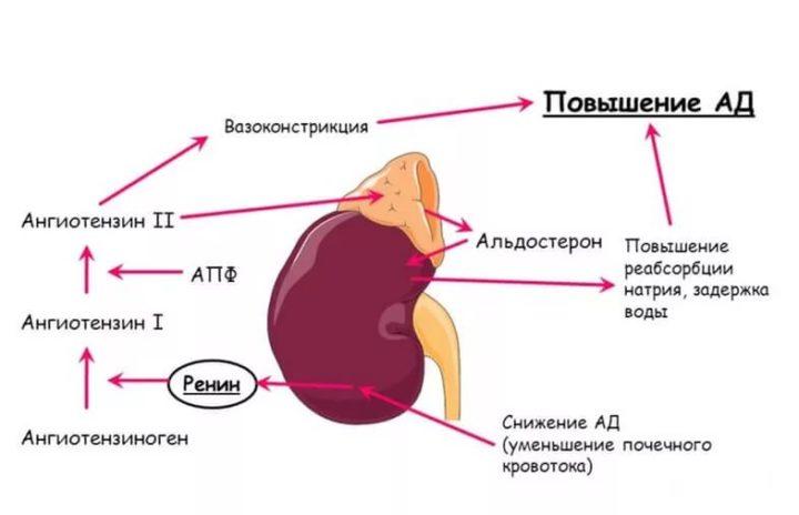 Подавления альдостерона