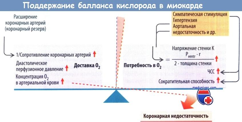 Концентрация кислорода в миокарде