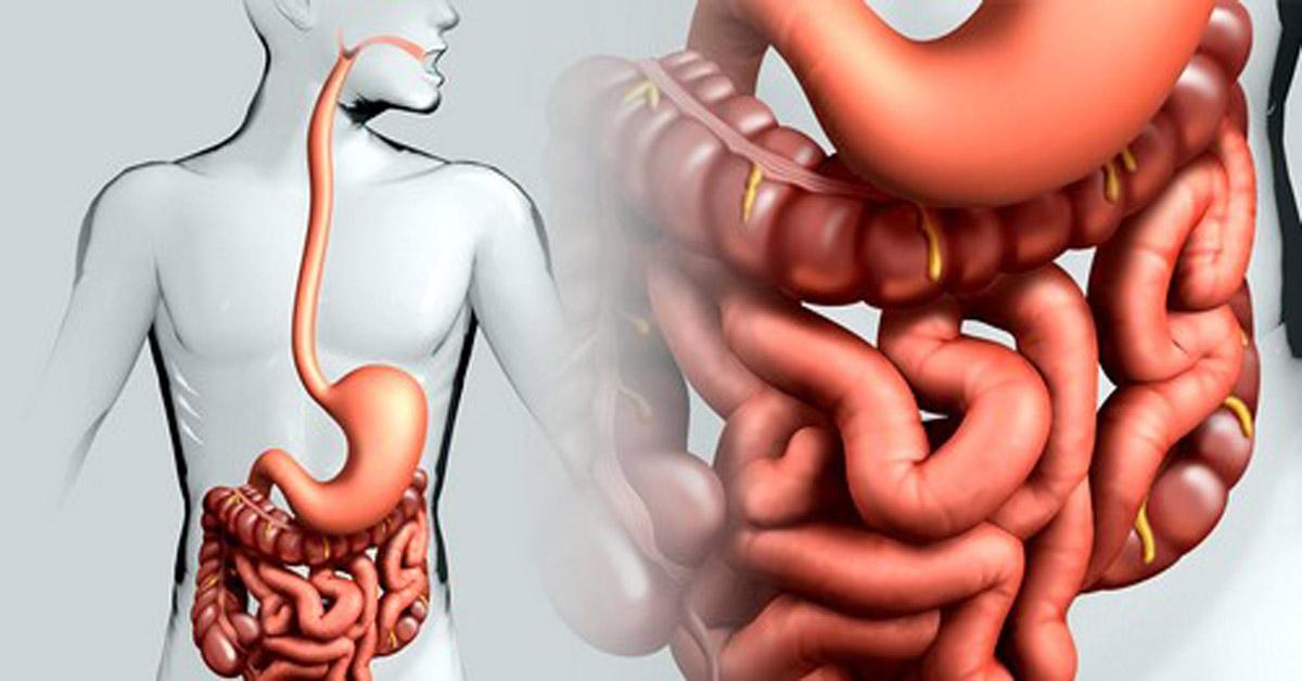 Выводится через кишечник и почки