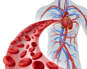 Нормализация работы кровеносных сосудов