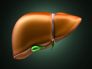 Первичный метаболизм происходит в клетках печени
