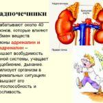 Болезни таких органов, как надпочечники