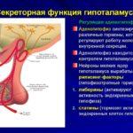 Cекреторную активность желез