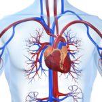 Нарушение сердечно-сосудистой системы