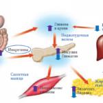 Неправильную глюкозо-галактозную абсорбцию