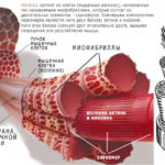 Нервные сокращения мышц