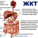 Органы желудочно-кишечного тракта